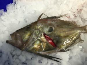 saint pierre cotier poisson st quay